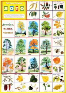 Лото логическое: Деревья, плоды, листья (350х500)