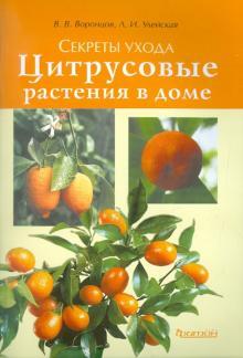 Цитрусовые растения в доме
