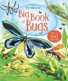 Big Book of Bugs - Emily Bone